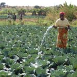 SMEs big boost to farmers across Africa, report says